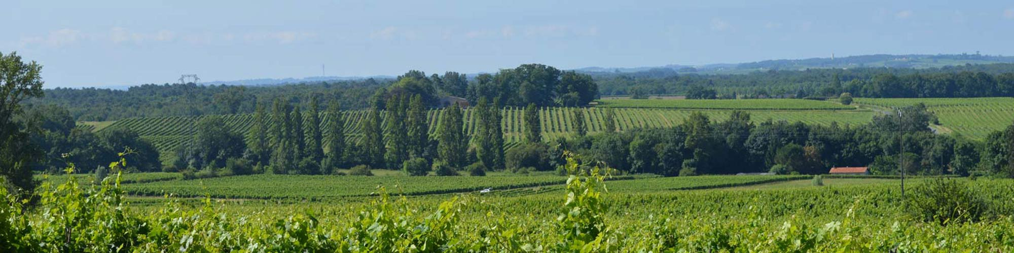 terroir_bordeaux_grangeneuve